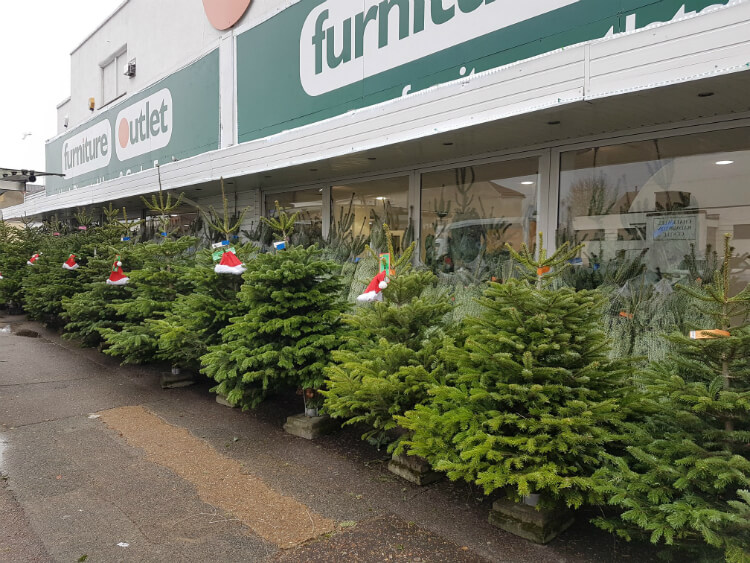 Real Christmas Trees at our Leigh-on-Sea store