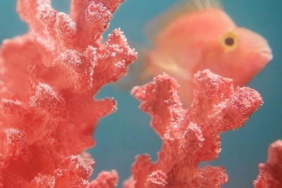 Living Coral is Pantone Colour of the Year 2019